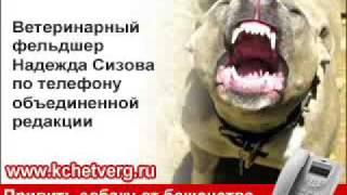 Привить собаку от бешенства можно бесплатно