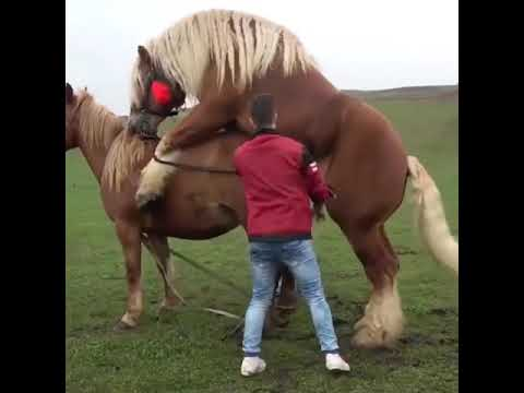 Download Amazing Animals - Super Murrah Donkey Meeting Horse First Time Must Watch ...