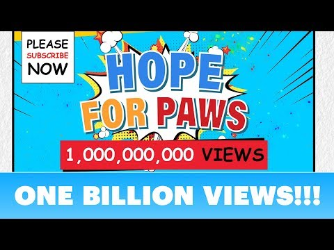 We did it!!!  ONE BILLION views of awareness on our Hope For Paws channel!