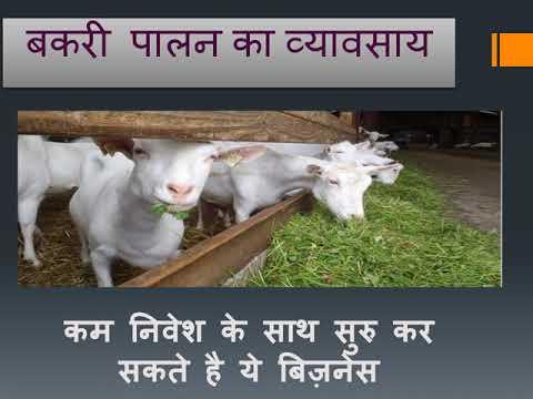 बकरी पालन का व्यावसाय (GOAT FARMING BUSINES) SMALL SCALE FARMING