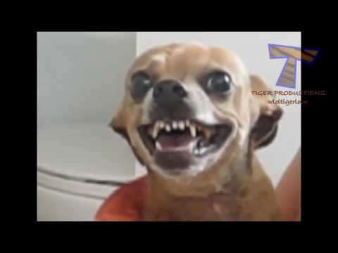 Funny pet Dogs really hate bath time - Funny dog bathing compilation PART 2