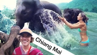Travel Vlog Thailand - We Found Elephants in Chiang Mai