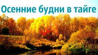 Осенние будни в тайге Захожу на промысловый участок