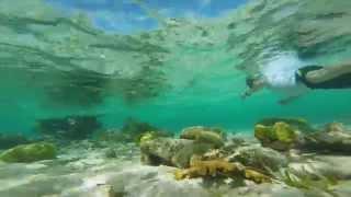 Belize Barrier Reef Snorkeling Video