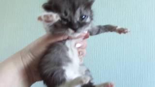 ГРУДНЫЕ КОТЯТА НАЙДЕНЫШИ ИЗ ПАКЕТА! Одна из котят осталась у нас, это наша МАРНИ. (апрель 2016.)