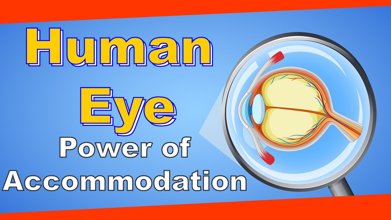 Class 10 science Power of accommodation of the human eye Grade 10 ...