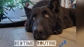 MY DOGS BEDTIME ROUTINE   GERMAN SHEPHERD