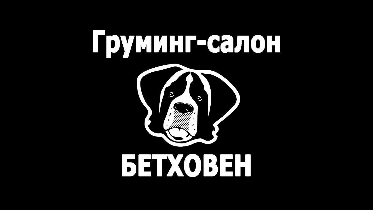 Объявления вся россия дата · возраст · цена · керри-блю-терьер девочка подросток. Привита, чипирована. Документы ркф. Папа и мама им.