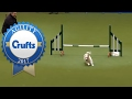 Hilarious Jack Russell Goes Crazy with Excitement at Crufts 2017! の動画、YouTu…