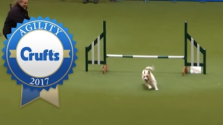 Repeat youtube video Hilarious Jack Russell Goes Crazy with Excitement at Crufts 2017!