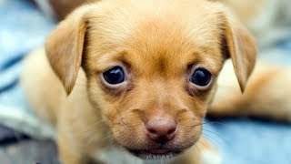 Puppies Talking and Arguing With Their Humans Compilation New