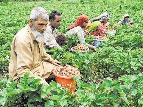 Indian farmer sex