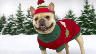 одежда для собак купить интернет магазин москва