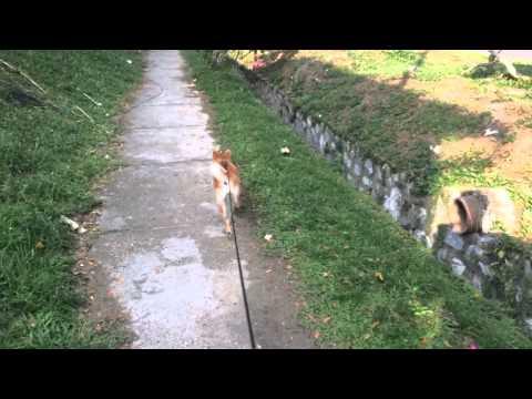 Aeris walk walk