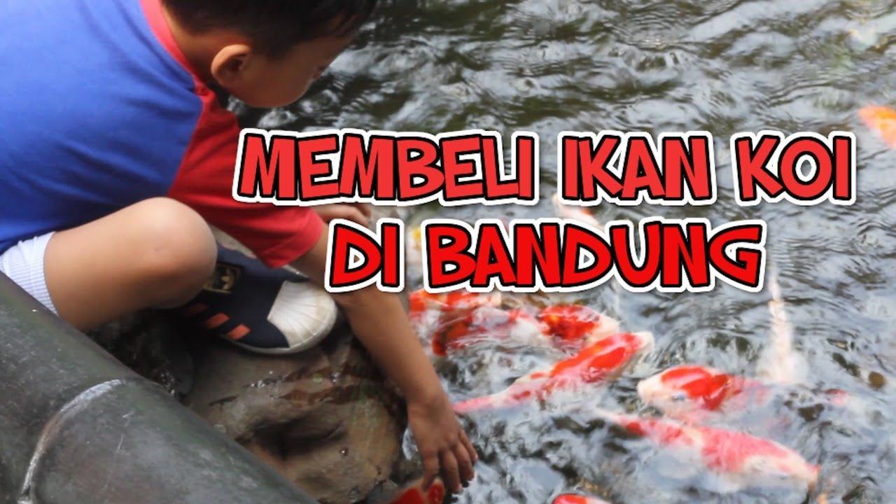 Membeli Ikan Koi di Bandung, Murah dan Bagus Banget ...