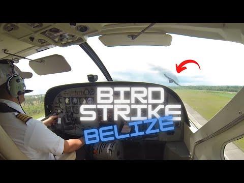 Bird strike Cessna 208 Caravan - Maya Island Air Belize