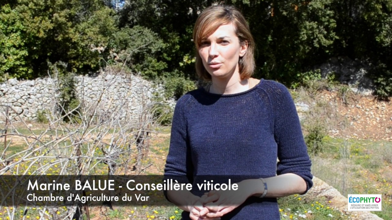 Alternatives au d sherbage chimique chambre d agriculture du var youtube - Chambre d agriculture du var ...