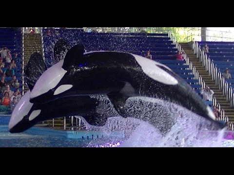 When Orca's won't perform - July 26 2015 - 6pm - SeaWorld San Antonio