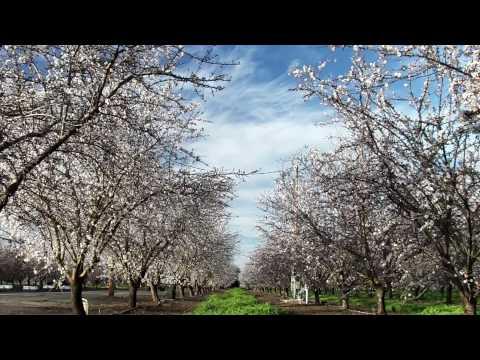Vanishing of the Bees Trailer
