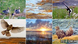 The best moments from the Bird Island in Norway