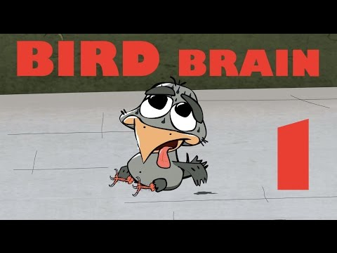 BIRD BRAIN HD, EPISODE 1