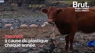 Écosse : le message de désespoir face à la pollution d'une jeune vétérinaire