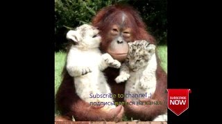 Любовь животных, до слез ;) ||  Love animals to tears