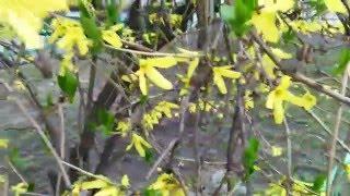 Красивоцветущее дерево(, 2014-05-05T09:58:20.000Z)