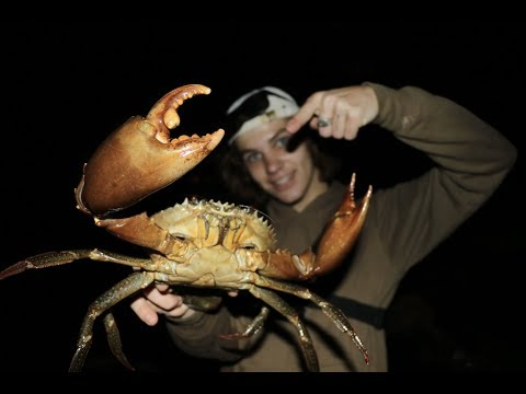 HUGE MUDCRAB Catch And Cook Caught BAREHANDED! (ASUS ZenBook)