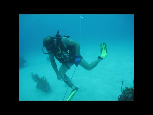 Lionfish Spearing with a Spear Gun  in Cuba