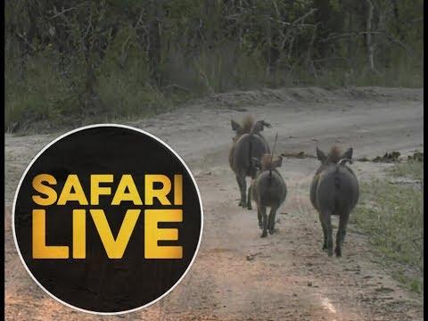 safariLIVE - Sunset Safari - May, 25. 2018