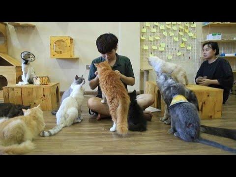 فيديو: في فيتنام يأكلون لحم القطط.. ولكن هذا الشاب فتح مقهى لها…  - نشر قبل 4 ساعة