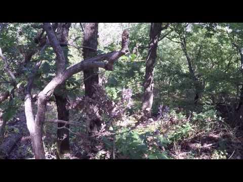 Ясенец - Неопалимая купина » Фазенда-онлайн / сайт о