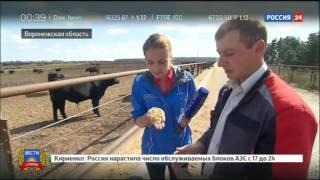 Вести с полей: мраморная говядина по-воронежски