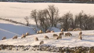 Gerald Finzi - Cello Concerto Op. 40 II - Andante Quieto