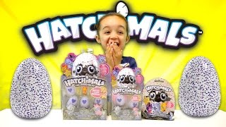LIMITED EDITION HATCHIMAL COLLEGGTIBLES TOY OPENING - NEW TOYS FOR 2017 -SURPRISE BLIND BAGS
