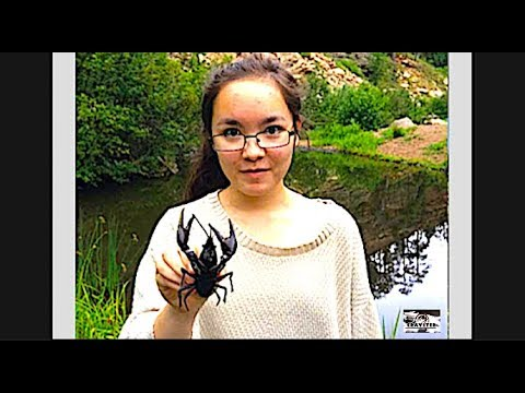 Arizona Crawfish Camp, Crayfish Catch And Cook An Invasive Species