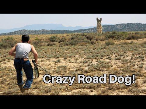 Hasty Coyote Hunt ( HEAD SHOT!!! )