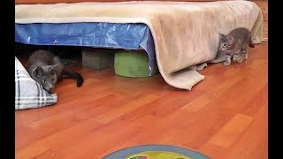 Kitten Scares Mama Cat (And Pays For It) thumbnail