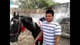 HORSE IN PUNJAB by SHERGILL71  SANDEEP KAKA,,,,,,, INDIA