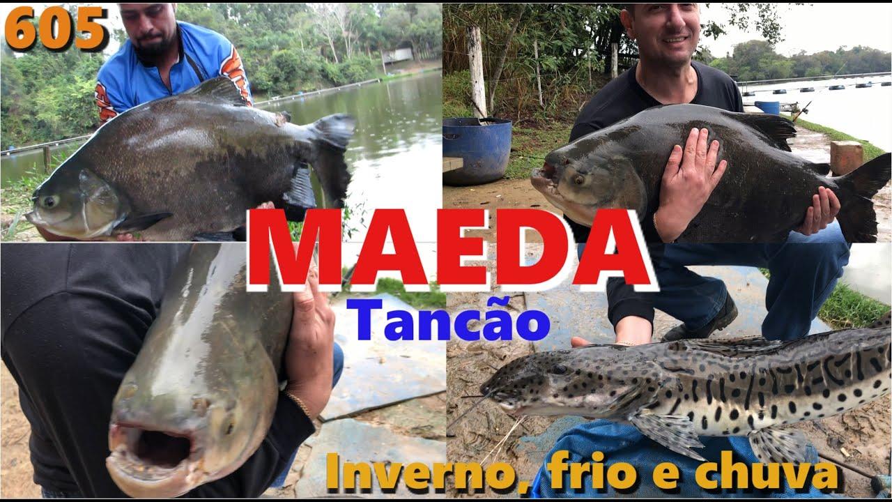 Frio e muita Chuva no Tancão do Pesqueiro MAEDA - Programa Fishingtur 605 Pesca e Pescaria
