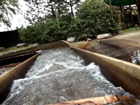 Riding the Log Flume at Canobie Lake Park (From 8/10/11)