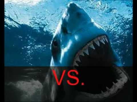 Megalodon VS. Predator...