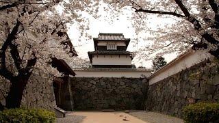 福岡県 福岡城の桜 [HD]
