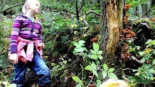 Kindergruppe sammelt Hallimasch-Pilze