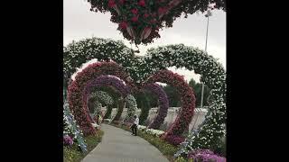 Miracle Garden Dubai, UAE