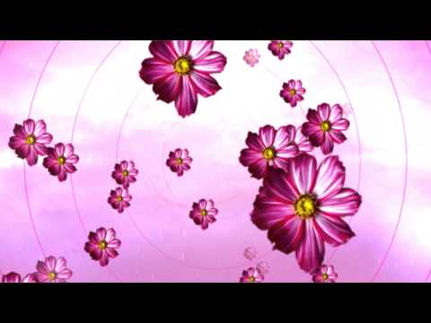 Free HD Motion Background | Floral Pink Daisy Wedding Background 02 thumbnail