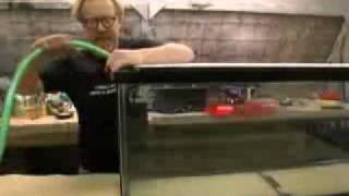Mythbusters Floating on Invisible Water