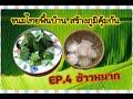 ข้าวหมาก ขนมไทยพื้นบ้านเสริมภูมิคุ้มกัน
