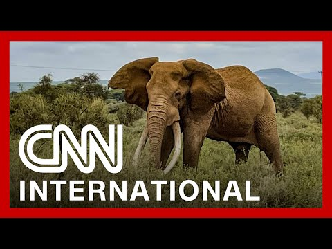 See how African national park is trying to count every animal
